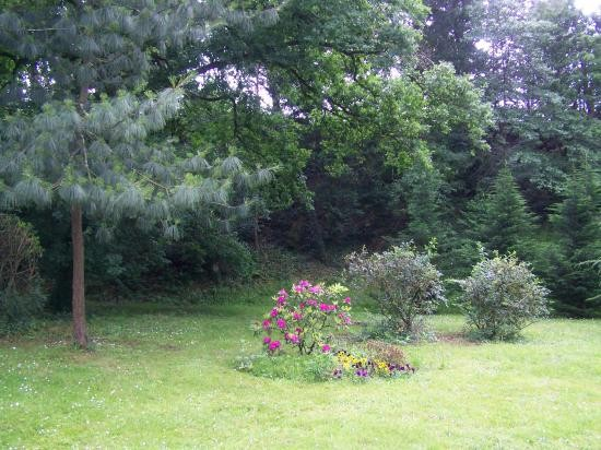 39 rhododendron pin pleureur de l himalaya